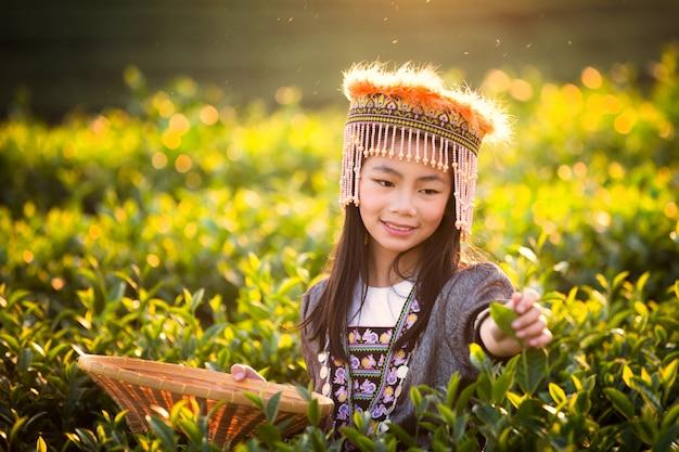 Сбор листьев зеленого чая девушкой Premium Фотографии