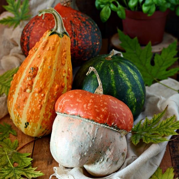 カボチャの収穫。ハロウィーンのお祝いの作曲。 Premium写真