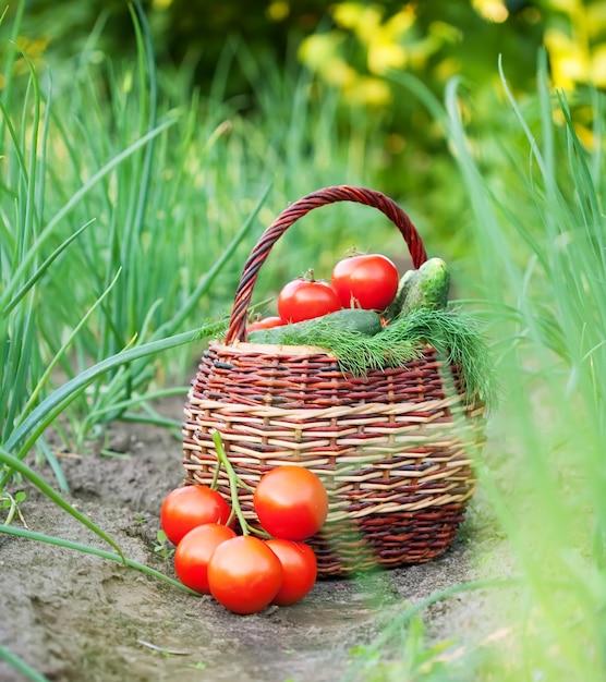 Harvested vegetables in basket Free Photo