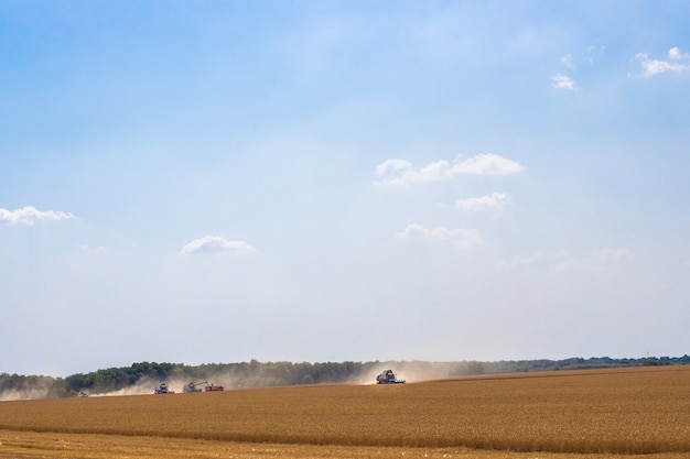 Комбайны в поле с пшеницей работают на уборке урожая Premium Фотографии