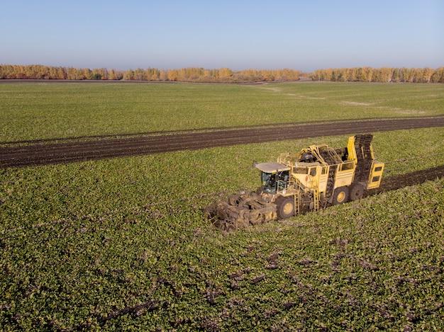 日中のテンサイ畑の機械の高さの収穫 Premium写真