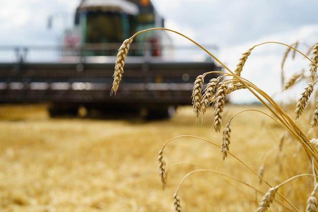Harvesting wheat in summer Premium Photo