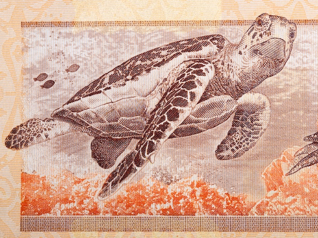 Hawksbill sea turtle a portrait from malaysian money Premium Photo
