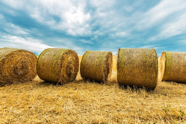 Hay bales agriculture scenery Free Photo