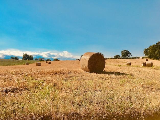 Fieno nel vasto campo durante il giorno Foto Gratuite