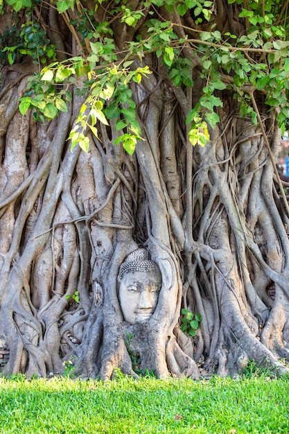 Head of buddha statue in the tree roots at wat mahathat in ayutthaya province, thailand Premium Photo