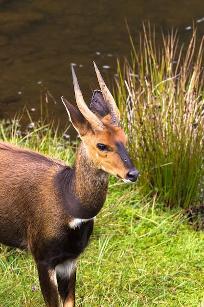 Глава антилопы крупным планом кения африка Premium Фотографии
