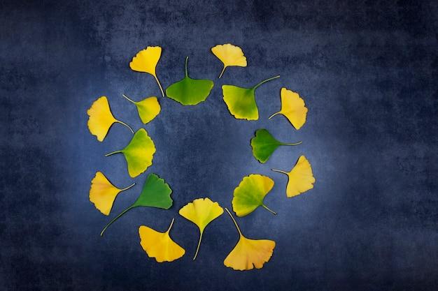 한의학에서 장수와 건강을 기억하기 위해 노란색과 녹색 은행 나무 잎을 치유하는 것은 어두운 배경에 원 안에 놓여 있습니다. 프리미엄 사진