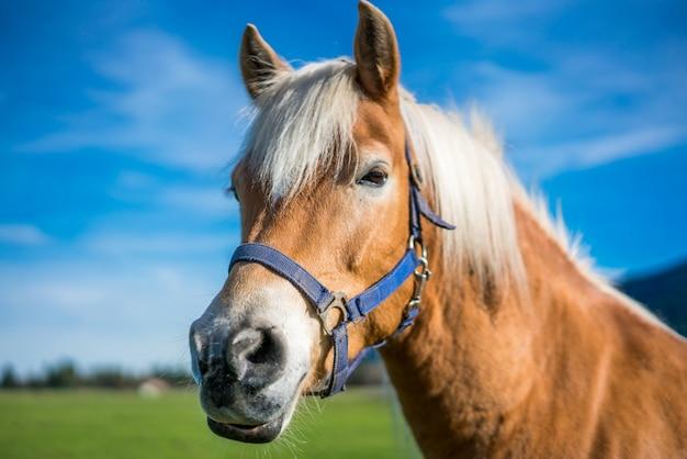 Healthy horse portrait Premium Photo