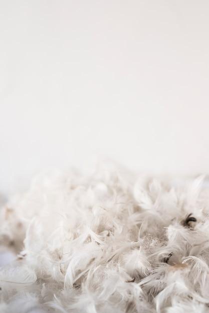Heap of bird feathers Free Photo