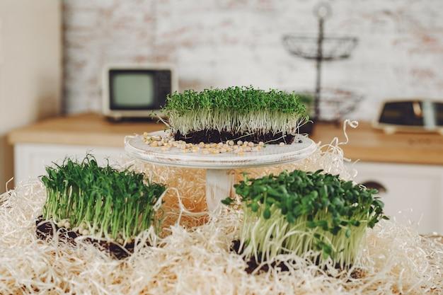 テーブルのビートマイクログリーンのヒープ 無料写真