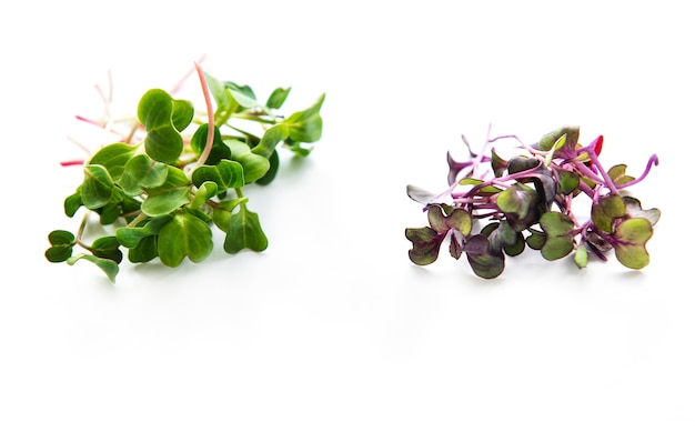 Куча редиса микрозелень Premium Фотографии