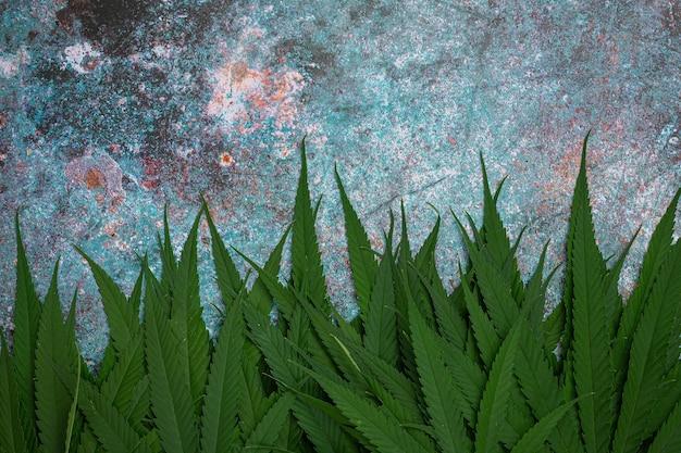 Куча листьев марихуаны. Бесплатные Фотографии