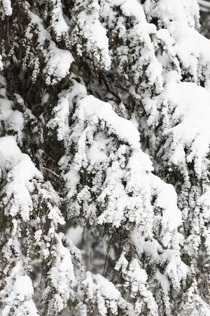 Heavy snow over branches of trees Free Photo