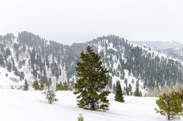 잭슨 홀, 와이오밍, 미국의 산에서 겨울철 폭설 날씨 프리미엄 사진