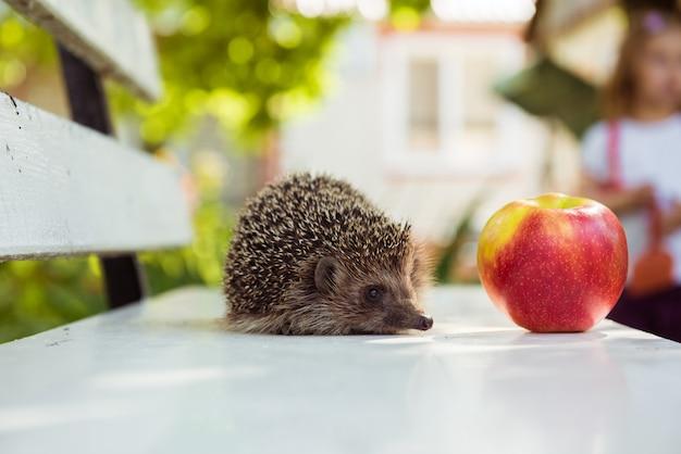 ハリネズミと赤い熟したリンゴ。コピースペース Premium写真