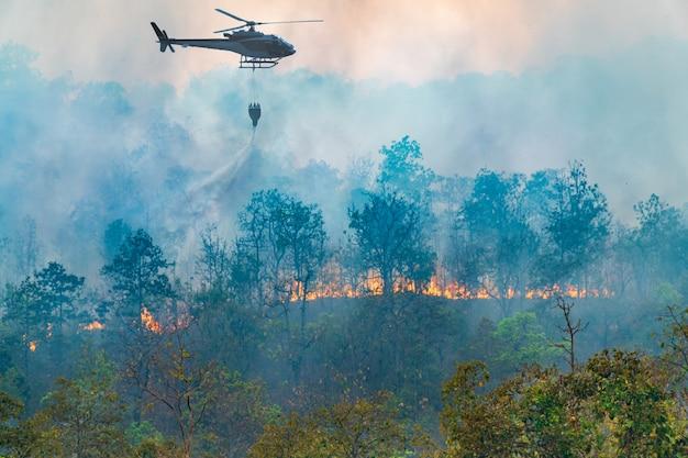 Вертолет сбрасывает воду на лесной пожар Premium Фотографии