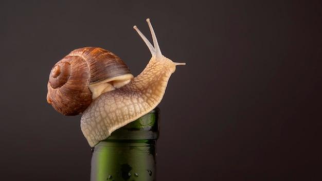 Helix pomatia grape snail on a bottle Premium Photo