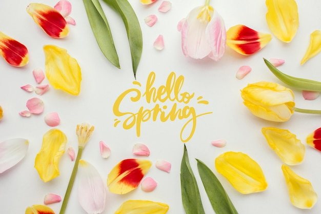 Hello spring word and flower petals Free Photo