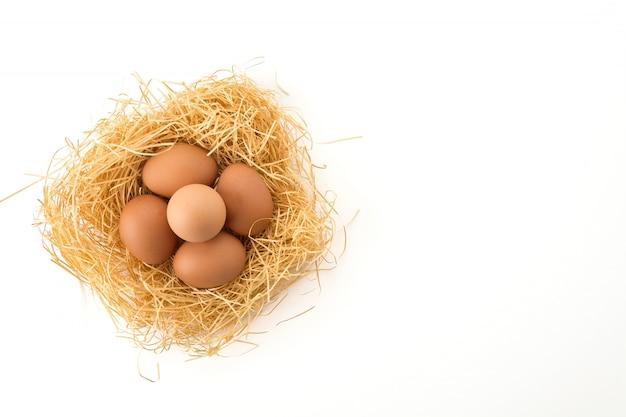 Hen egg Free Photo