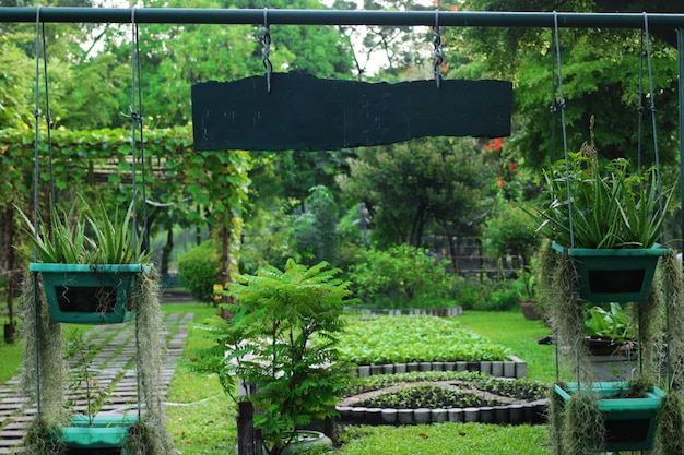 Herbal garden gate with sun flare Premium Photo