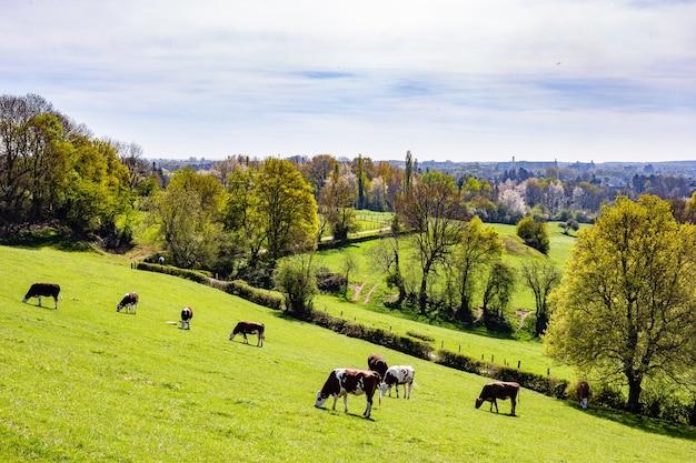 Стадо коров, пасущихся на пастбище в дневное время Бесплатные Фотографии