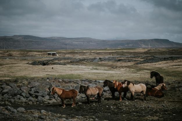Табун лошадей, пасущихся в поле с высокими скалистыми горами Бесплатные Фотографии