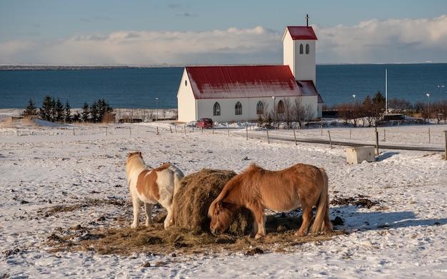 教会を背景に放牧している馬の群れ 無料写真