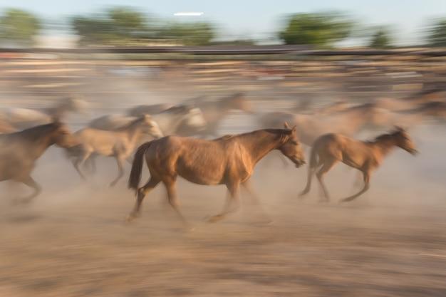 Табун лошадей в движении размыт. Premium Фотографии