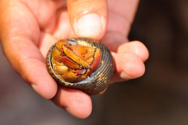 Hermit crab in a hand Premium Photo