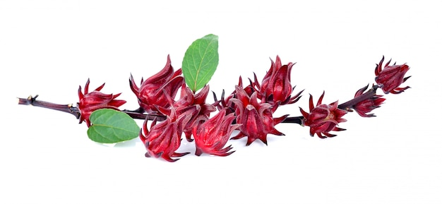 Hibiscus sabdariffa or roselle fruits isolated on white Premium Photo