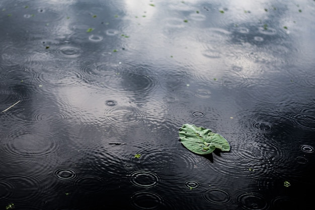 High angle closeup shot of an isolated green leaf in a puddle on a rainy day Free Photo