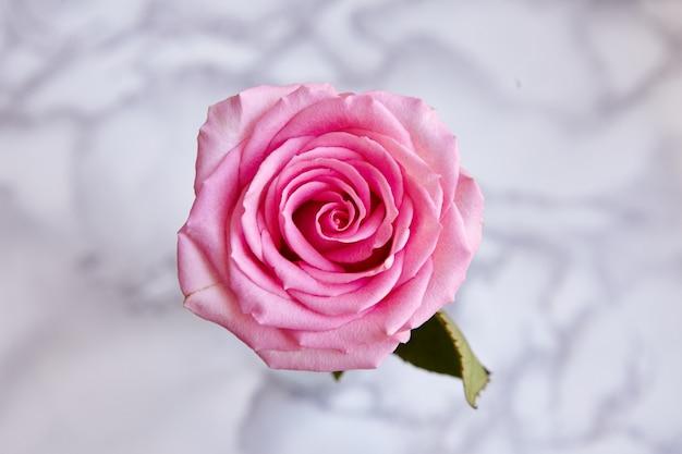 美しい咲いたピンクのバラの高角度のクローズアップショット 無料写真