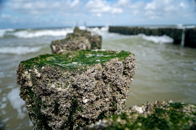 High angle closeup shot of stones with moss on top leading to the wavy sea Free Photo