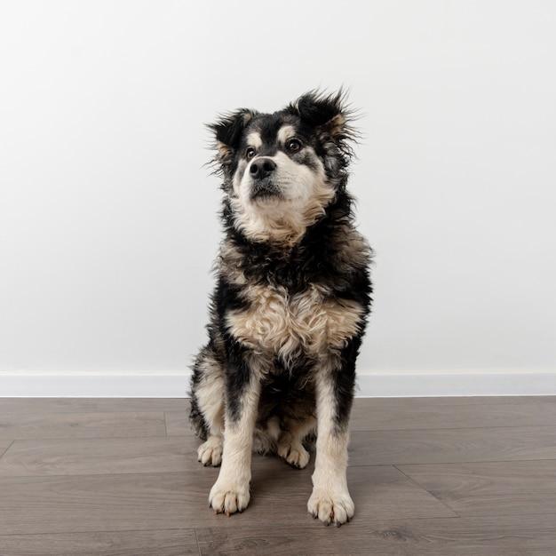 High angle cute dog at home Free Photo