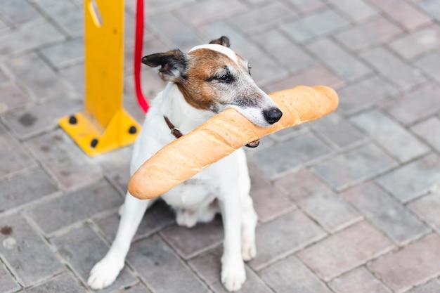 Высокий угол собака сидит и держит багет Бесплатные Фотографии
