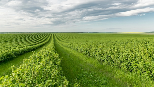 Высокий угол сельхозугодий в сельской местности Бесплатные Фотографии