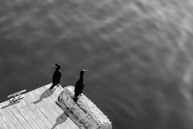 水によって木製の桟橋に座っている2つの黒い海鳥のハイアングルグレースケールショット 無料写真
