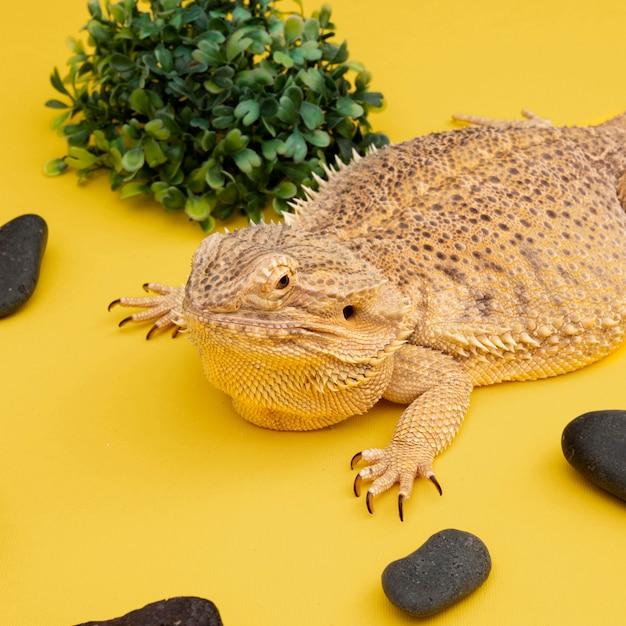 Elevato angolo di animale domestico iguana con rocce e vegetazione Foto Gratuite