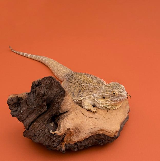 Alto angolo di iguana seduto su un pezzo di legno con copia spazio Foto Gratuite