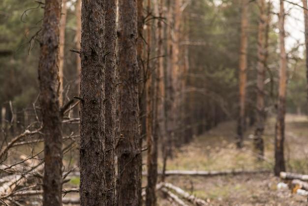 高角度の自然の景色 無料写真