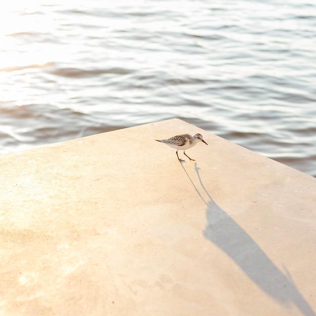 湖のほとりのカモメの高角度 無料写真