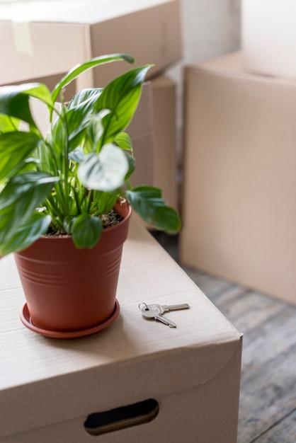 Alto angolo di pianta sulle scatole per il trasloco Foto Gratuite