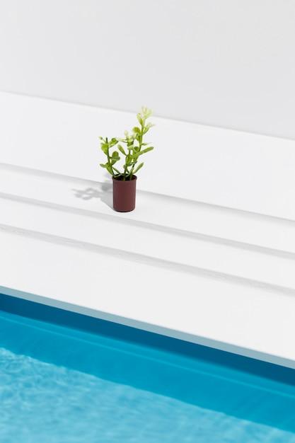プールの横にある鍋に高角度の植物 無料写真