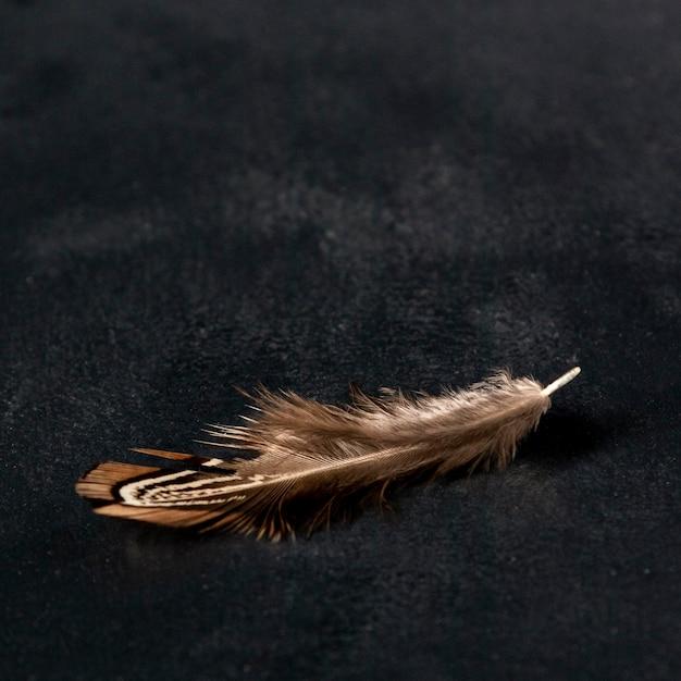 높은 각도의 메추라기 깃털 무료 사진
