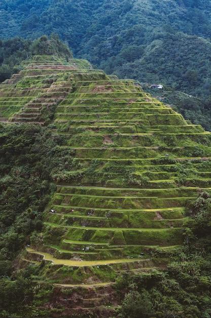Colpo dell'angolo alto di bello paesaggio nelle terrazze del riso di banaue, provincia di ifugao, filippine Foto Gratuite