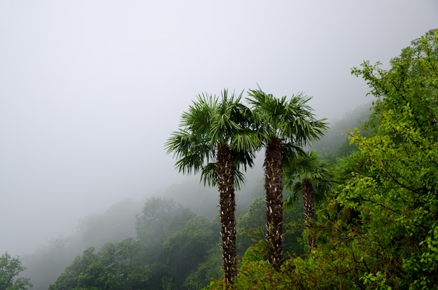 High angle shot of the beautiful palm trees in the middle of a foggy forest Free Photo