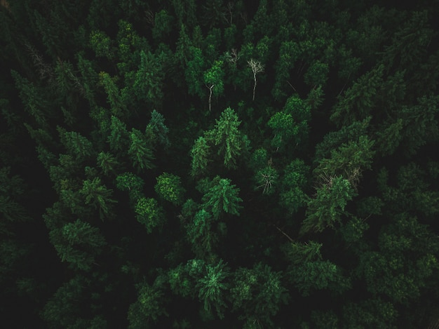 High angle shot of a beautiful tropical jungle with exotic tall trees Free Photo
