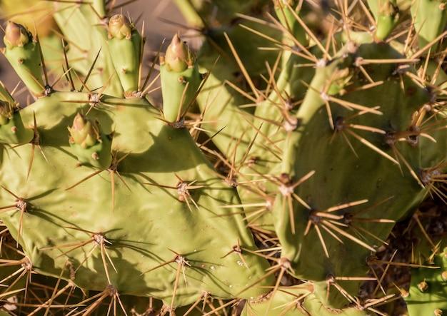 Colpo di alto angolo di cactus con spine appuntite nel dessert Foto Gratuite