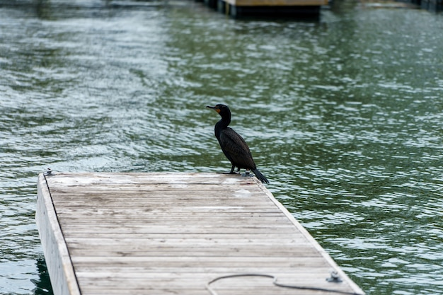 High angle shot of a cormorant bird perched on the wooden pier Free Photo